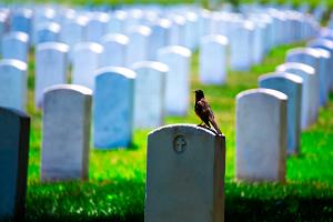 burial_thumbnail